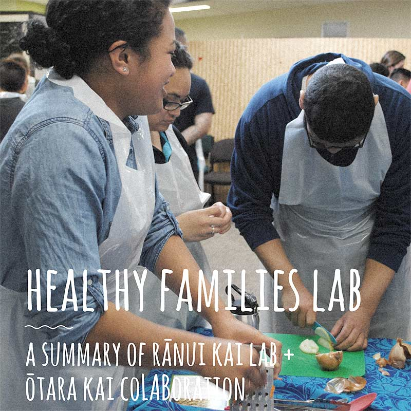 Healthy Families Lab Summary Document cover image
